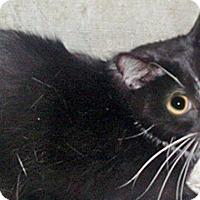 Adopt A Pet :: Buster - Wildomar, CA