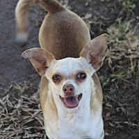 Adopt A Pet :: Sarah - Kempner, TX