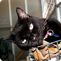 Adopt A Pet :: Tori - Bradenton, FL