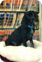Cocker Spaniel Dog for adoption in Sugarland, Texas - Charlie Wonder
