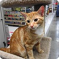 Adopt A Pet :: Nohea - Warminster, PA