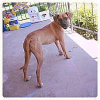Adopt A Pet :: Marilyn - Louisville, KY