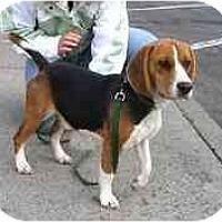 Adopt A Pet :: Lou - Portland, OR