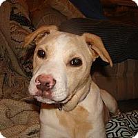 Adopt A Pet :: Cassie - New Boston, NH