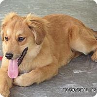 Adopt A Pet :: Twilight - Humboldt, TN
