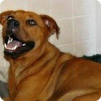 Adopt A Pet :: Macy - Justin, TX
