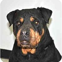 Adopt A Pet :: Kayla - Port Washington, NY