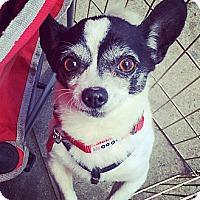 Adopt A Pet :: Cooper - North Hollywood, CA