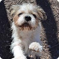 Adopt A Pet :: Scruffy McScruff - Temple, GA