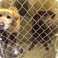 Adopt A Pet :: Tucker and Trixie - Stamford, CT
