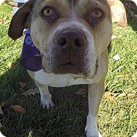 Adopt A Pet :: Dulcinea-Adopted! - Detroit, MI
