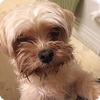 Adopt A Pet :: LEO - Oakland, CA