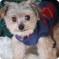 Adopt A Pet :: Phoenix - Bedminster, NJ