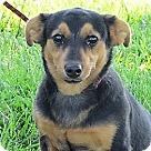 Adopt A Pet :: Chic