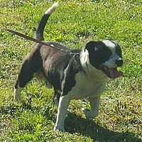 Adopt A Pet :: Mick - Evensville, TN