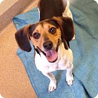 Adopt A Pet :: 1-11 - Triadelphia, WV