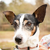 Adopt A Pet :: Ms Berry - Daleville, AL