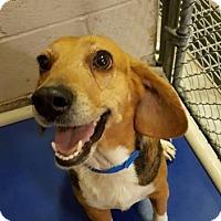 Adopt A Pet :: Thelma - HOLD - Sparta, NJ