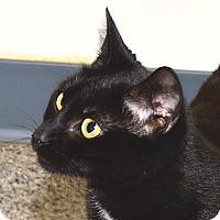 Adopt A Pet :: Rachel - Eastsound, WA