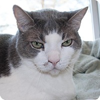 Adopt A Pet :: Clooney - Georgetown, TX