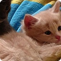 Adopt A Pet :: BINX - Pena Blanca, NM