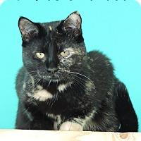 Adopt A Pet :: Mischka - Brookings, SD