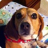 Adopt A Pet :: Quincy - Phoenix, AZ