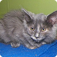 Adopt A Pet :: Phoebe - Dover, OH