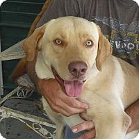 Adopt A Pet :: Oliver - Marlton, NJ