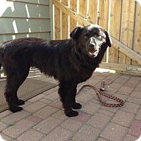 Adopt A Pet :: Willow - Saskatoon, SK