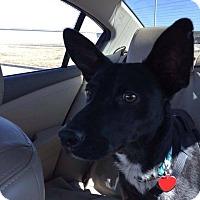 Adopt A Pet :: Zeek - San Antonio, TX