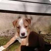 Adopt A Pet :: Cobalt - Marlton, NJ