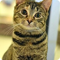 Adopt A Pet :: Lani - Aiken, SC