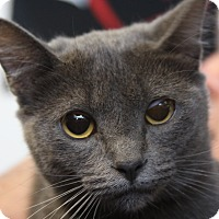 Adopt A Pet :: Zuki - Sarasota, FL