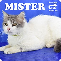 Adopt A Pet :: Mister - Carencro, LA