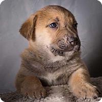 Adopt A Pet :: Dylan - Downey, CA