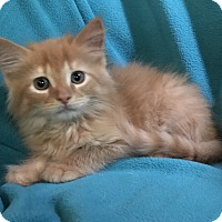 Adopt A Pet :: Ryker - Nashville, TN