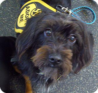 Dachshund Mix Dog for adoption in San Jose, California - Kool-Aid