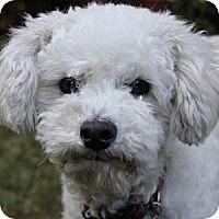 Adopt A Pet :: Margie - La Costa, CA