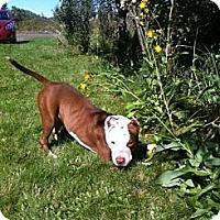 Adopt A Pet :: Nora - Hancock, MI