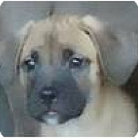 Adopt A Pet :: Baby Beau - Beachwood, OH
