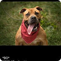 Adopt A Pet :: Bo - ADOPTED! - Zanesville, OH