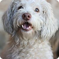 Adopt A Pet :: Casper - Canoga Park, CA