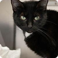 Adopt A Pet :: Midnight - Martinsville, IN