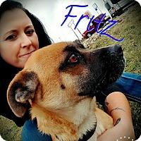 Adopt A Pet :: Frtiz - Danbury, CT