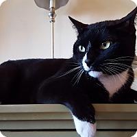 Adopt A Pet :: Harrison - Staten Island, NY