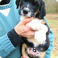 Adopt A Pet :: RILEY - Williston Park, NY