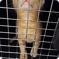 Adopt A Pet :: Flannery - Lexington, KY