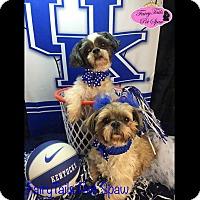 Adopt A Pet :: Jazzy and Shorty - LEXINGTON, KY