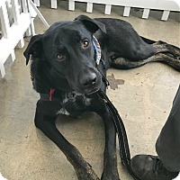 Adopt A Pet :: Rex - Los Angeles, CA